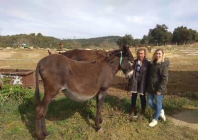annelie-anna-fuives-donkey-1